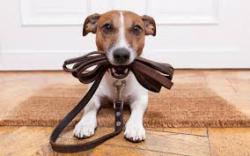 Η σημασία της βόλτας στην καθημερινότητα του σκύλου